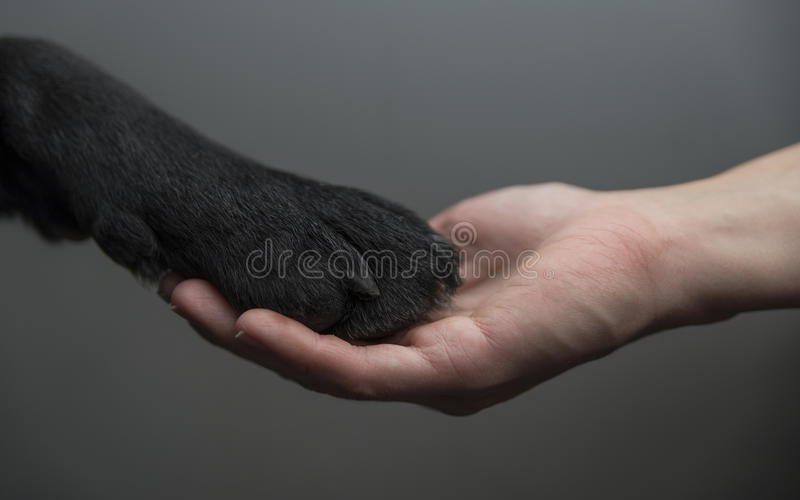 Ανθρώπινα εκμετάλλευσης χέρια σκυλιών και μιας στοκ εικόνα
