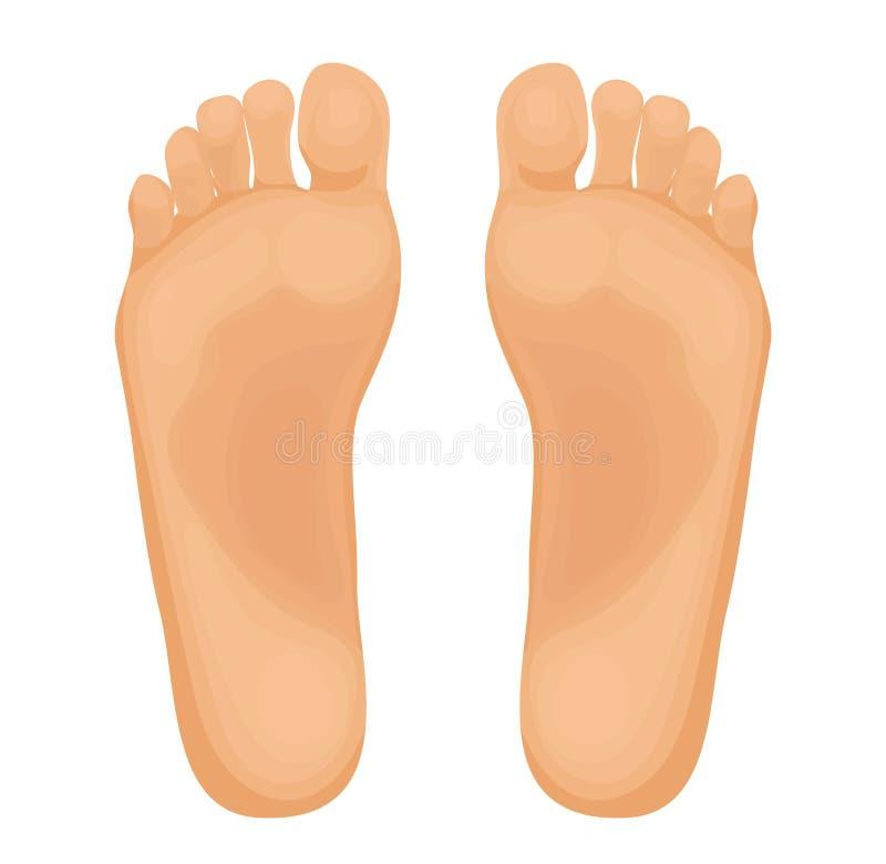 Ανθρώπινα πόδια διανυσματικής απεικόνισης απεικόνιση αποθεμάτων