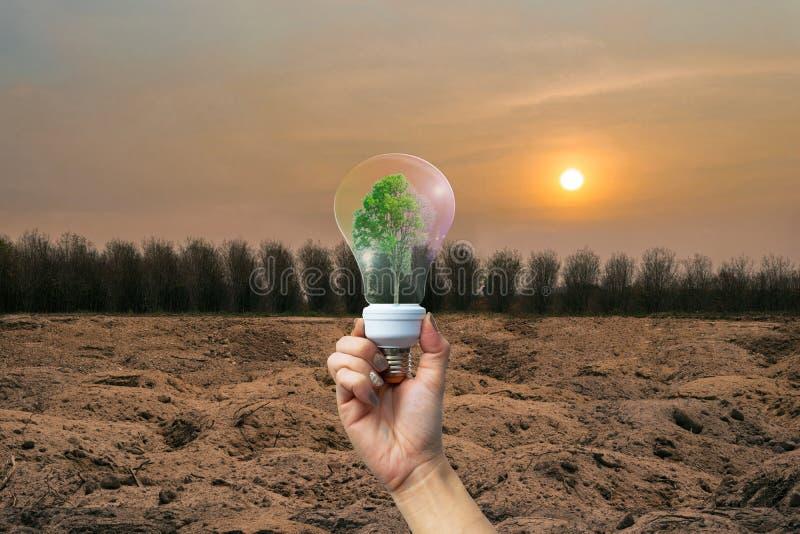 Ανθρώπινα χέρια περιβάλλοντος ξηρασίας ανακυκλώσιμα που κρατούν το μεγάλο δέντρο εγκαταστάσεων στοκ εικόνες