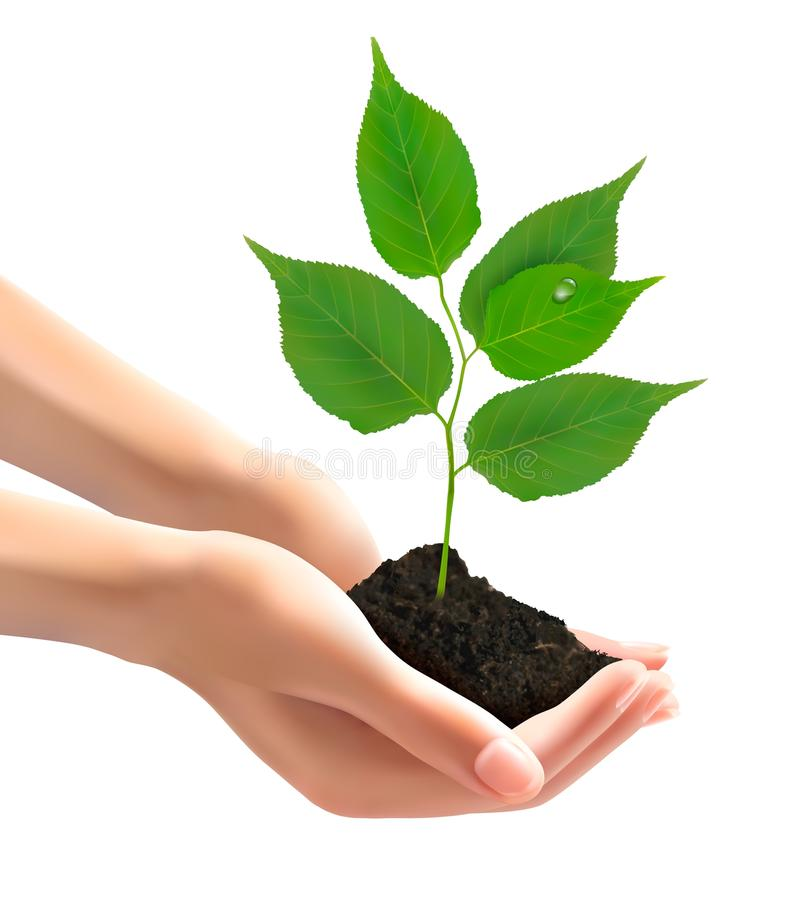 Ανθρώπινα χέρια που κρατούν το πράσινο δέντρο με τα φύλλα απεικόνιση αποθεμάτων