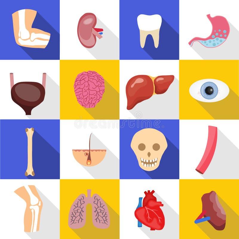 Ανθρώπινα όργανα Ένα μεγάλο σύνολο διάφορων ανθρώπινων οργάνων απεικόνιση αποθεμάτων