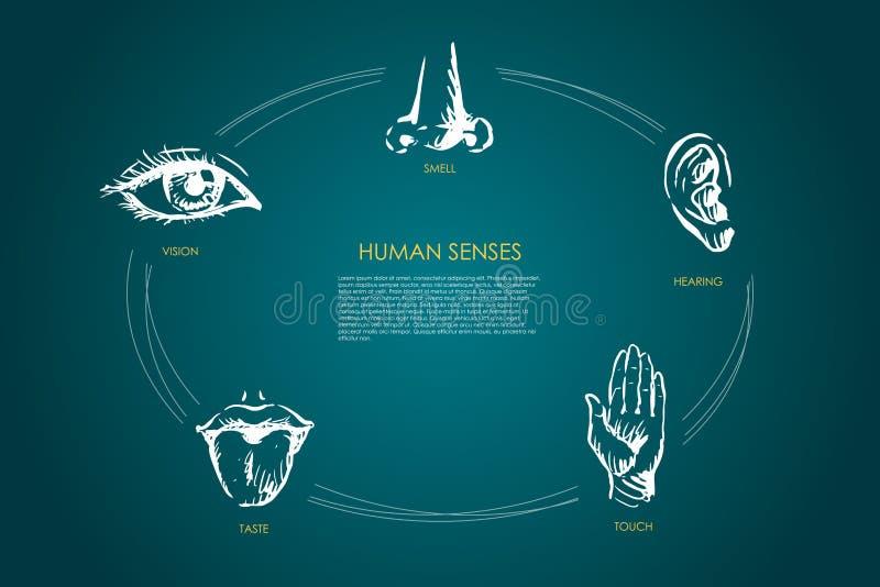 Ανθρώπινες αισθήσεις - όραμα, γούστο, αφή, ακρόαση, διανυσματικό σύνολο έννοιας μυρωδιάς διανυσματική απεικόνιση