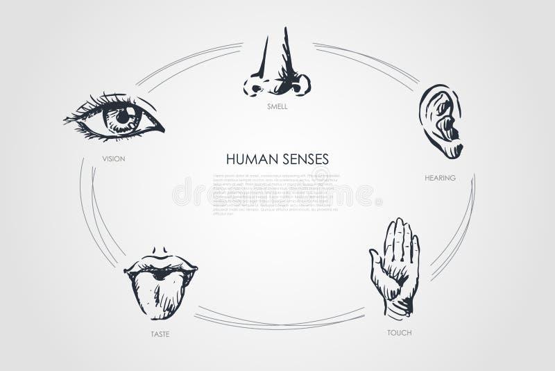 Ανθρώπινες αισθήσεις - όραμα, γούστο, αφή, ακρόαση, σύνολο έννοιας μυρωδιάς διανυσματική απεικόνιση