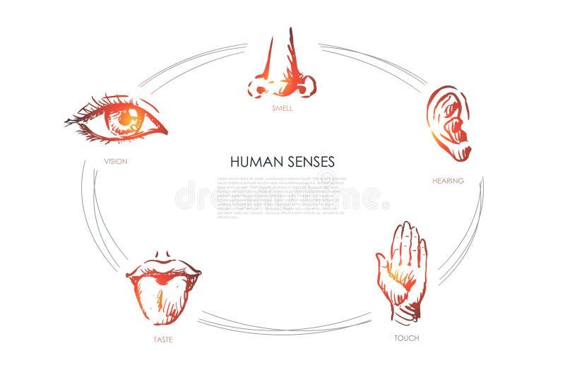 Ανθρώπινες αισθήσεις - όραμα, γούστο, αφή, ακρόαση, σύνολο έννοιας μυρωδιάς απεικόνιση αποθεμάτων
