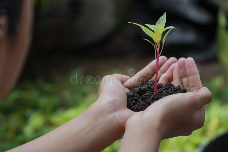 Ανθρώπινες πράσινες εγκαταστάσεις εκμετάλλευσης χεριών πέρα από το υπόβαθρο φύσης στοκ εικόνα