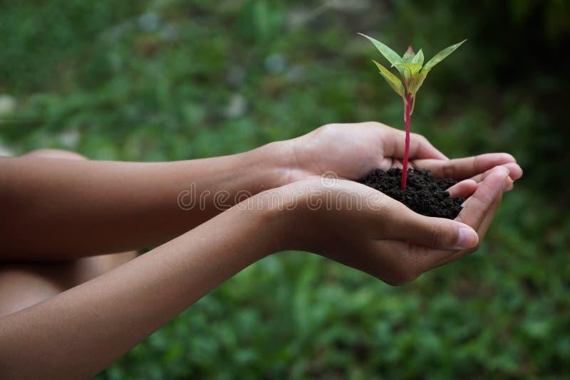 Ανθρώπινες πράσινες εγκαταστάσεις εκμετάλλευσης χεριών πέρα από το υπόβαθρο φύσης στοκ εικόνες