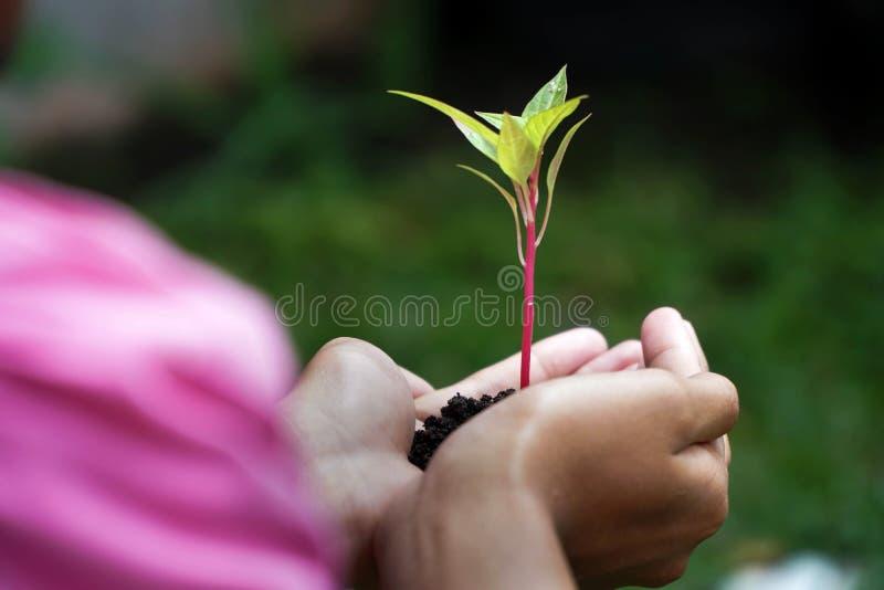 Ανθρώπινες πράσινες εγκαταστάσεις εκμετάλλευσης χεριών πέρα από το υπόβαθρο φύσης στοκ φωτογραφία με δικαίωμα ελεύθερης χρήσης
