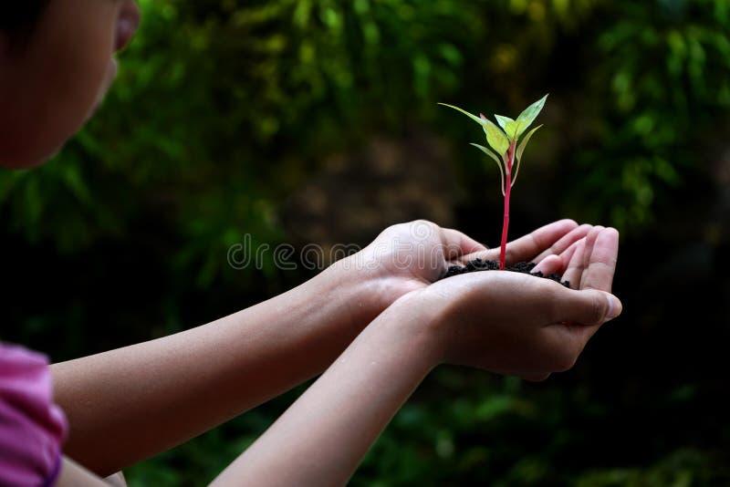 Ανθρώπινες πράσινες εγκαταστάσεις εκμετάλλευσης χεριών πέρα από το υπόβαθρο φύσης στοκ εικόνες με δικαίωμα ελεύθερης χρήσης