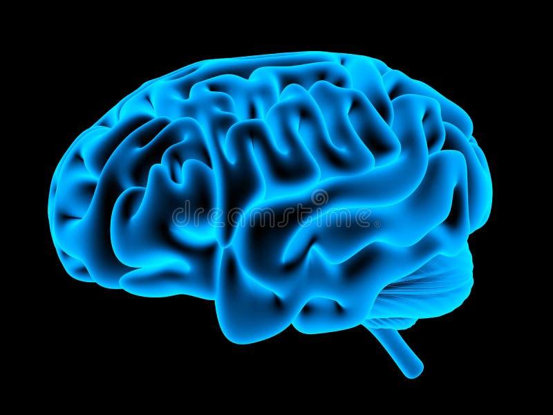 Ανθρώπινη ακτίνα X εγκεφάλου απεικόνιση αποθεμάτων