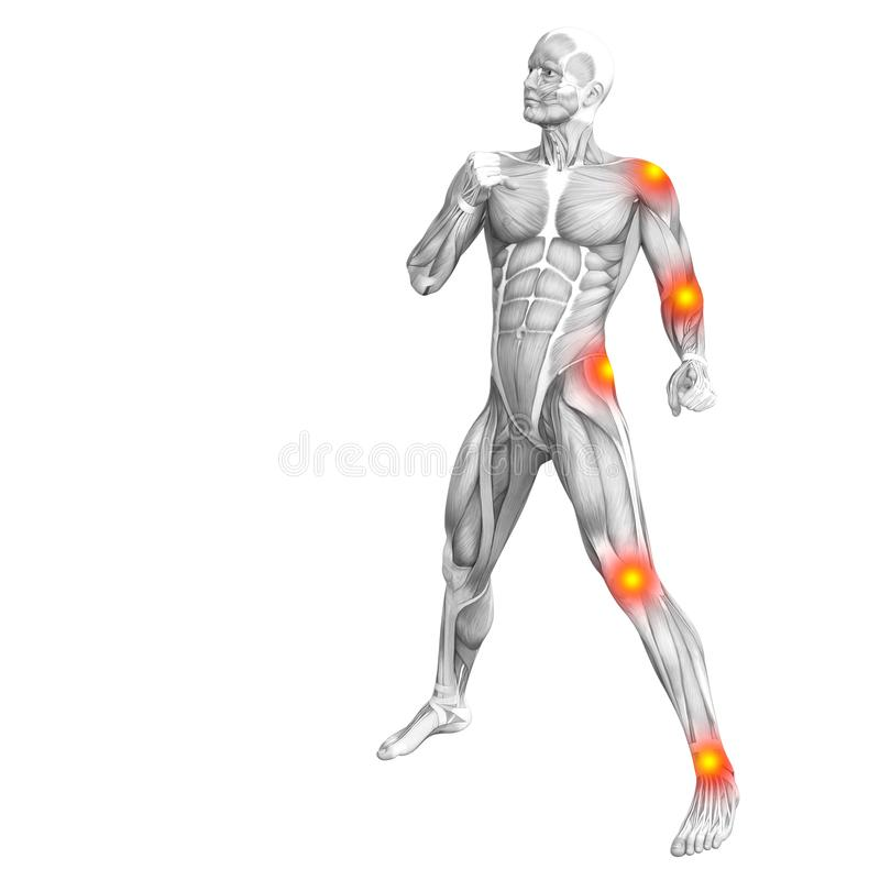 Ανθρώπινη ανατομία μυών με το κόκκινο και κίτρινο καυτό σημείο διανυσματική απεικόνιση
