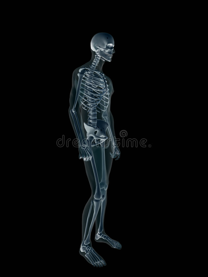 ανθρώπινη αρσενική ακτίνα Χ σωμάτων ακτίνα X ελεύθερη απεικόνιση δικαιώματος