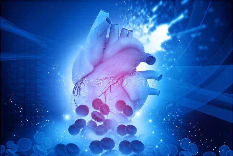 Ανθρώπινη καρδιά με τα κύτταρα αίματος διανυσματική απεικόνιση
