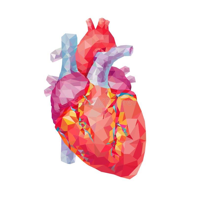 Ανθρώπινη καρδιά Polygonal γραφική παράσταση επίσης corel σύρετε το διάνυσμα απεικόνισης διανυσματική απεικόνιση