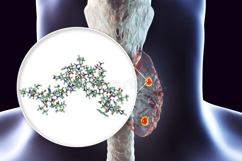 Ανθρώπινη parathyroid ορμόνη ελεύθερη απεικόνιση δικαιώματος