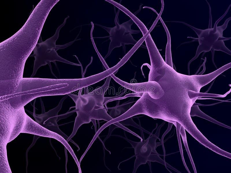Ανθρώπινοι νευρώνες ελεύθερη απεικόνιση δικαιώματος