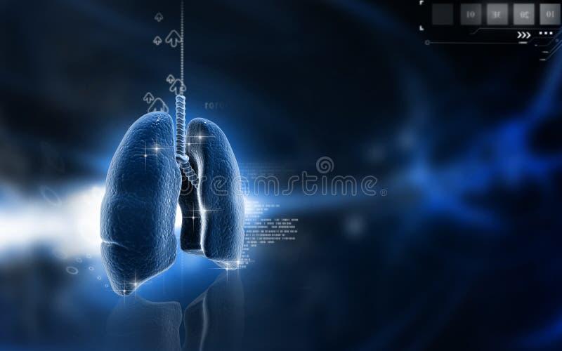 ανθρώπινοι πνεύμονες απεικόνιση αποθεμάτων