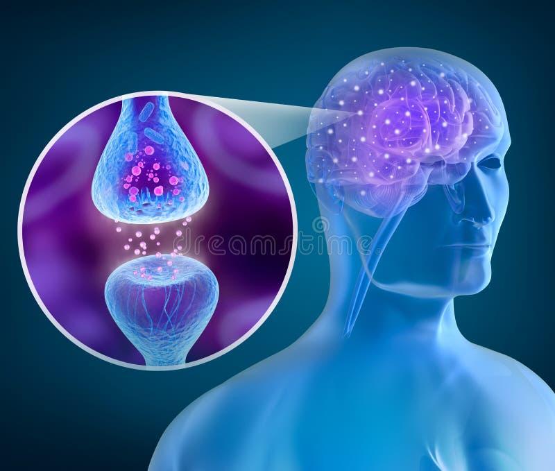Ανθρώπινος εγκέφαλος και ενεργός δέκτης ελεύθερη απεικόνιση δικαιώματος