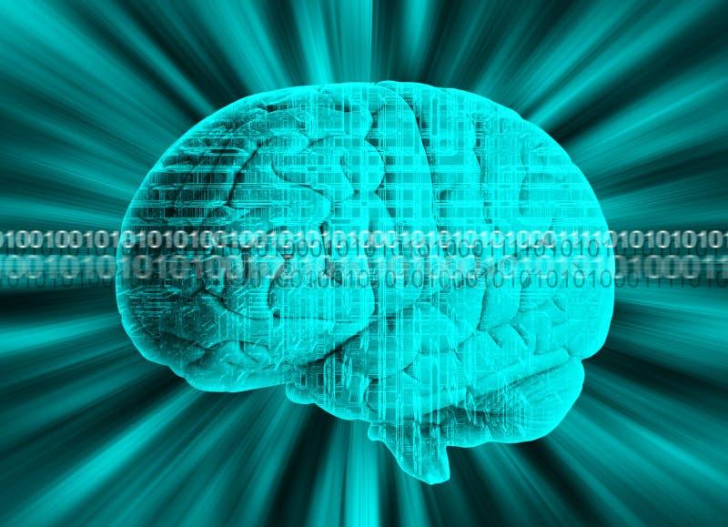Ανθρώπινος εγκέφαλος με το δυαδικό κώδικα στοκ φωτογραφία με δικαίωμα ελεύθερης χρήσης