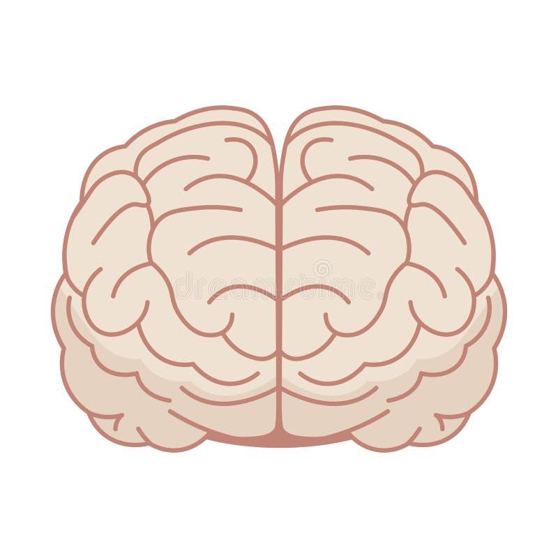 Ανθρώπινος εγκέφαλος στο επίπεδο ύφος επίσης corel σύρετε το διάνυσμα απεικόνισης Μπροστινή όψη απεικόνιση αποθεμάτων