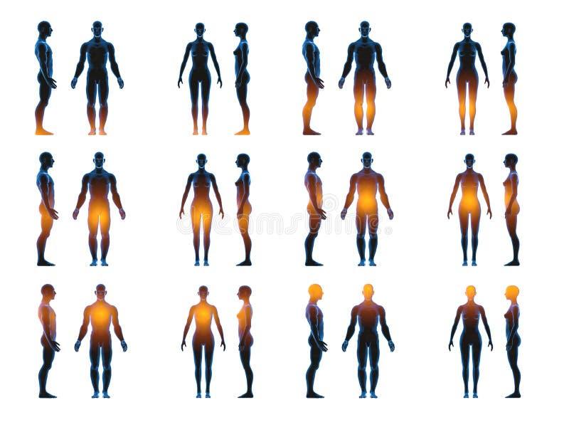Ανθρώπινο άνδρα-γυναίκας σώμα ακτίνας X Έννοια ανατομίας Απομονώστε, τρισδιάστατος δώστε ελεύθερη απεικόνιση δικαιώματος