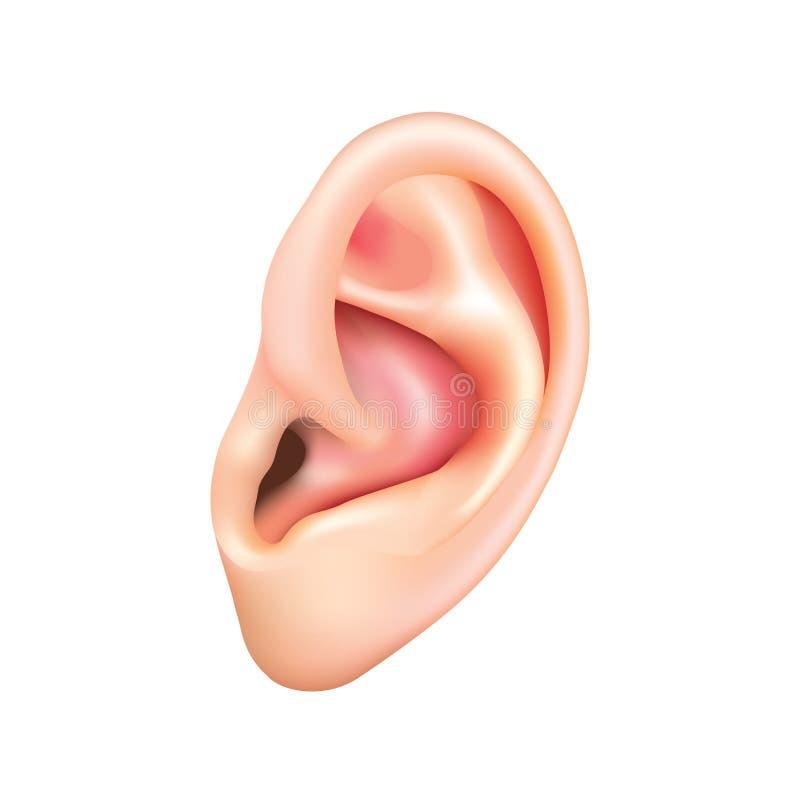 Ανθρώπινο αυτί που απομονώνεται στο άσπρο διάνυσμα απεικόνιση αποθεμάτων