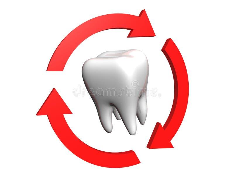 ανθρώπινο δόντι ελεύθερη απεικόνιση δικαιώματος