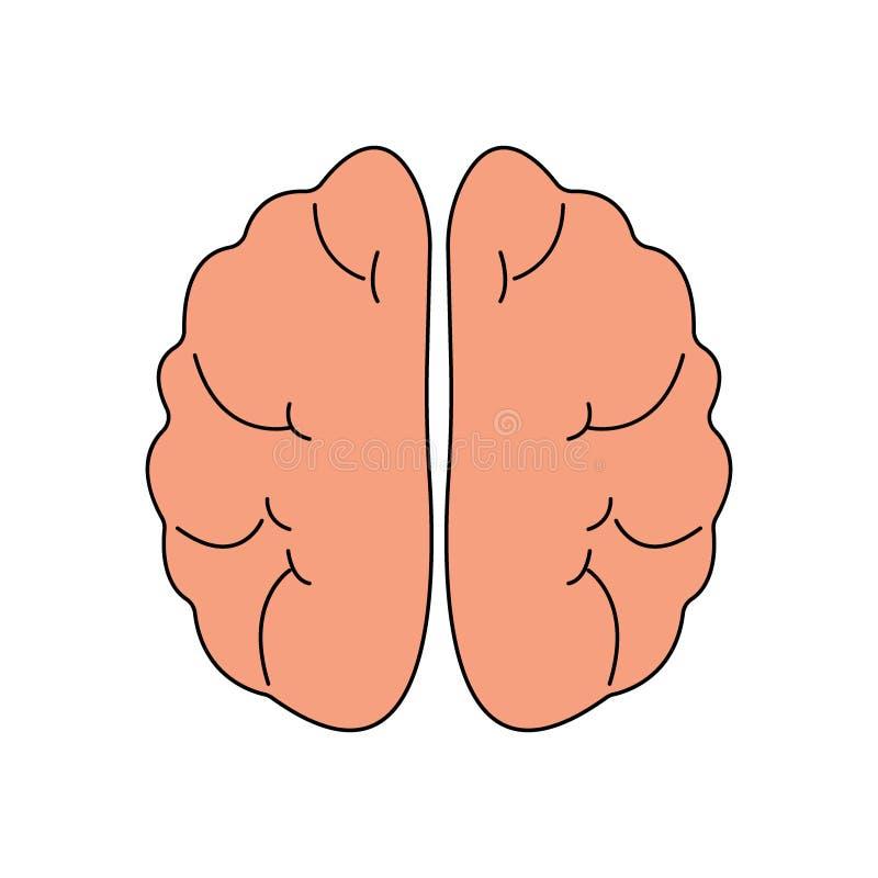 Ανθρώπινο εικονίδιο μπροστινής άποψης εγκεφάλου Σύμβολο οργάνων Hnternal Διανυσματική απεικόνιση στο ύφος κινούμενων σχεδίων που  απεικόνιση αποθεμάτων