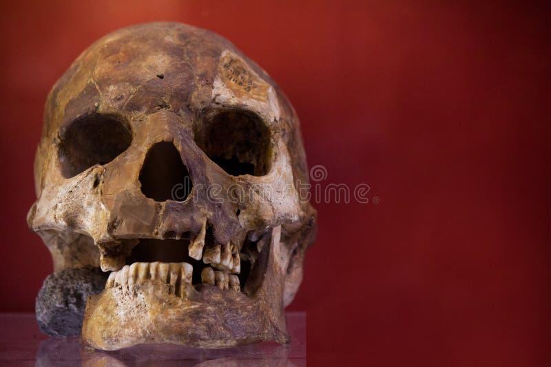 Ανθρώπινο κρανίο με το σκοτεινό υπόβαθρο Έννοια του θανάτου, της φρίκης και της ανατομίας Απόκοσμο σύμβολο αποκριών στοκ φωτογραφία με δικαίωμα ελεύθερης χρήσης