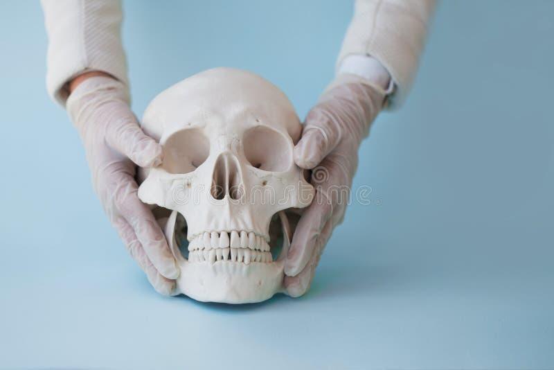 Ανθρώπινο κρανίο στο σαφές μπλε υπόβαθρο Ο γιατρός ή ο οικότροφος χεριών στα γάντια λατέξ βάζει το κρανίο στην επιφάνεια στοκ εικόνες