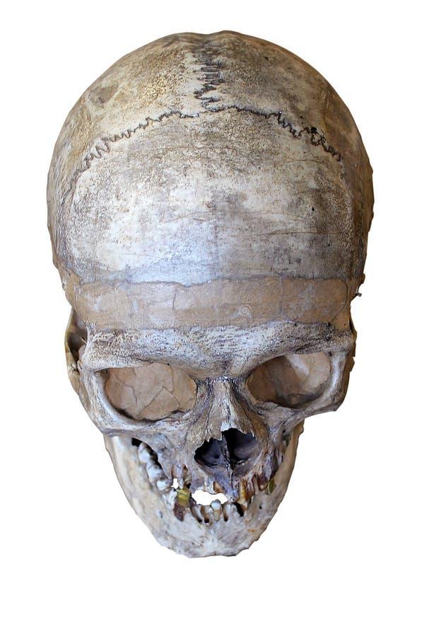 ανθρώπινο κρανίο στοκ φωτογραφία