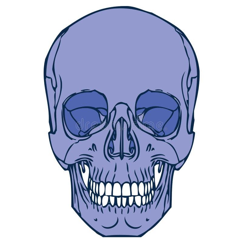 Ανθρώπινο κρανίο 02 διανυσματική απεικόνιση