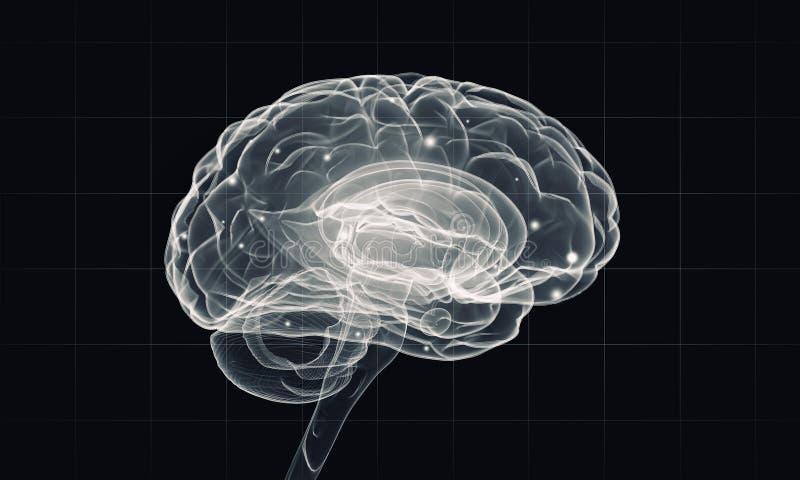 Ανθρώπινο μυαλό στοκ φωτογραφίες