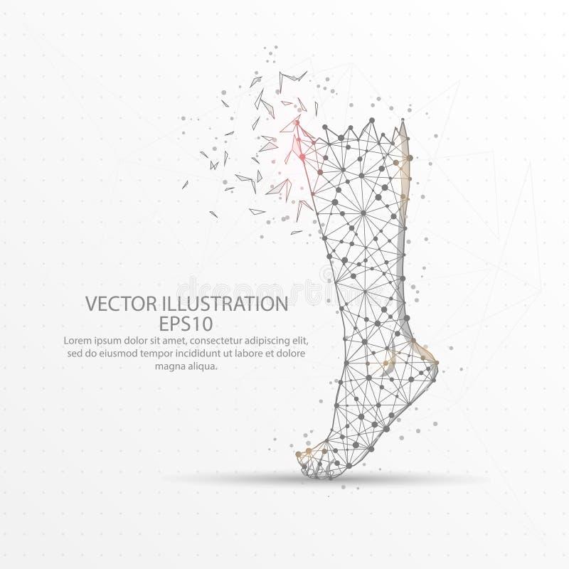 Ανθρώπινο πλαίσιο καλωδίων ποδιών χαμηλό πολυ στο άσπρο υπόβαθρο ελεύθερη απεικόνιση δικαιώματος