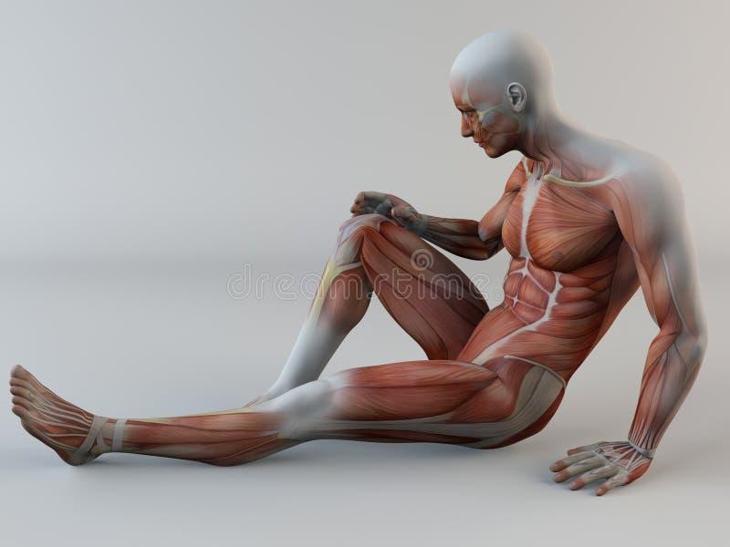 Ανθρώπινο σώμα, πόνος γονάτων, μυ'ες, δάκρυ μυών διανυσματική απεικόνιση