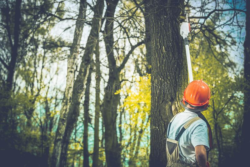 Ανθυγειινή περικοπή κλάδων δέντρων στοκ εικόνες