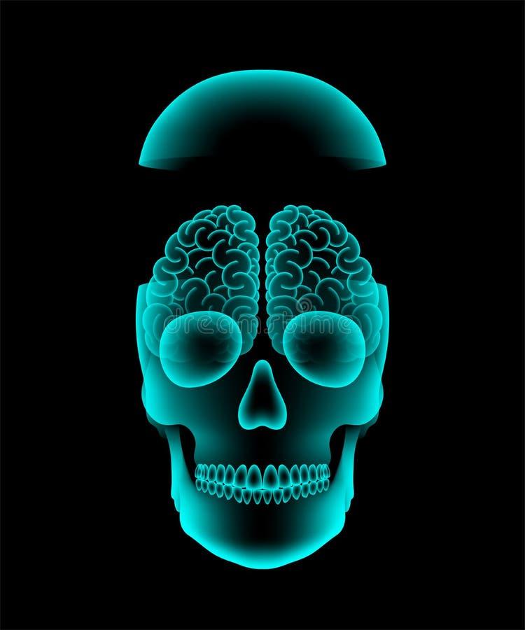 Ανοικτή ακτίνα X κρανίων με το σχέδιο έννοιας εγκεφάλου, απεικόνιση μπροστινής άποψης διανυσματική απεικόνιση