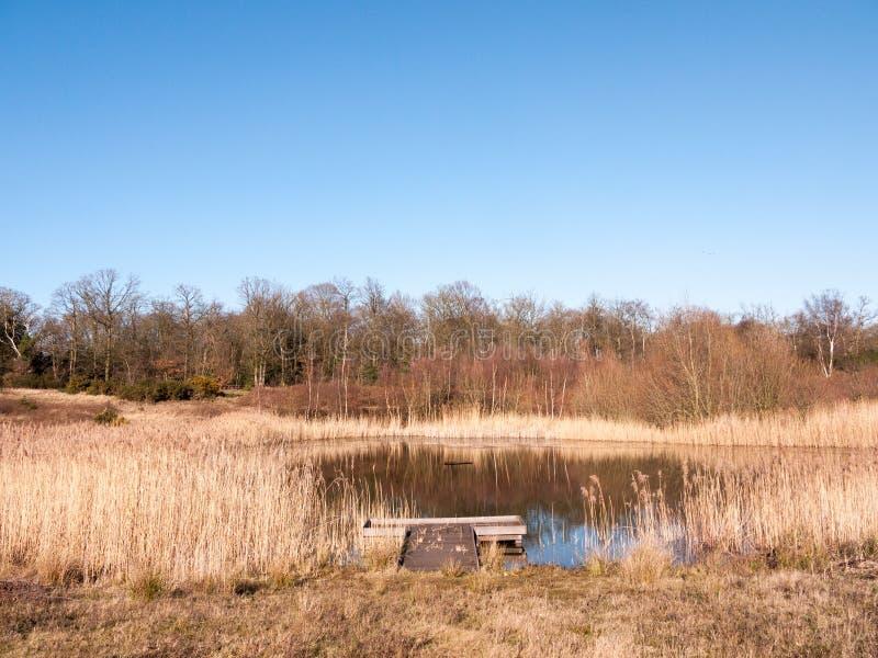 ανοικτοί κάλαμοι λιμνών λιμνών επιφύλαξης φύσης εδάφους χλόης θερινής ημέρας χρυσοί στοκ εικόνα με δικαίωμα ελεύθερης χρήσης