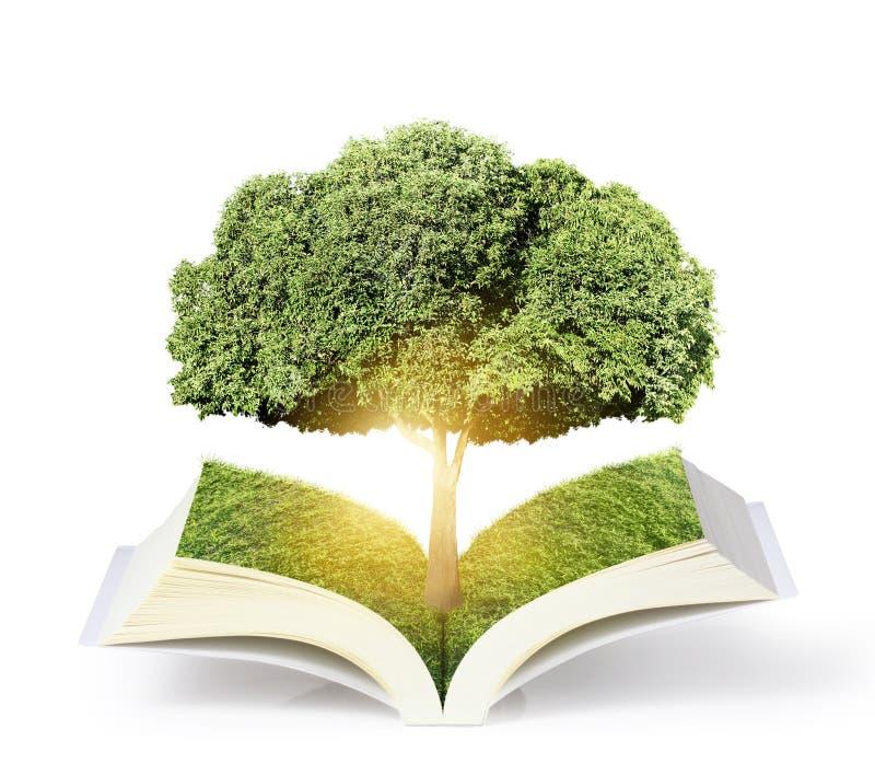 Ανοικτό βιβλίο με το πράσινο δέντρο διανυσματική απεικόνιση