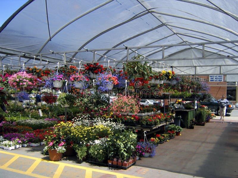 Download ανοικτό καλοκαίρι απωλειών ταχύτητος στηρίξεως αγοράς λουλουδιών Στοκ Εικόνα - εικόνα: 116541