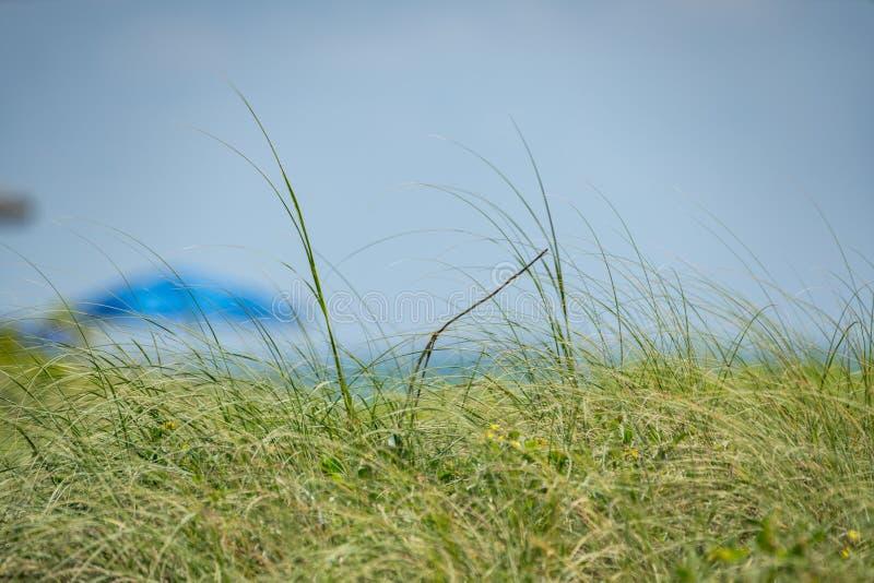 Ανοικτό μπλε μουτζουρωμένο υπόβαθρο λεπίδων της χλόης στοκ εικόνες