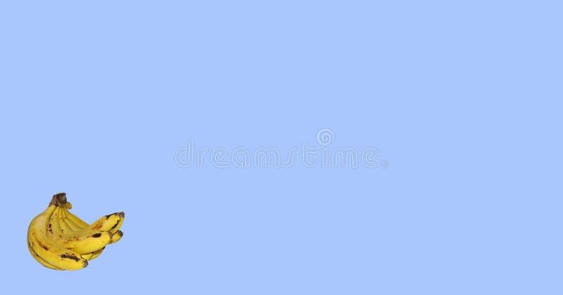 Ανοικτό μπλε υπόβαθρο με την ώριμη δέσμη μπανανών στην αριστερή γωνία στοκ εικόνες