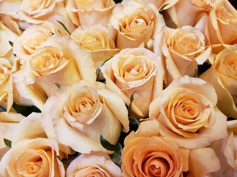 ανοικτό πορτοκαλί αυξήθηκε λουλούδια σε μια floral ανθοδέσμη, ένα υπόβαθρο και μια σύσταση στοκ εικόνα με δικαίωμα ελεύθερης χρήσης