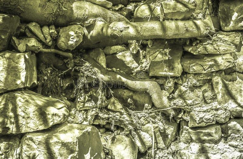 ανοικτό πράσινο υπόβαθρο, μεγάλες πέτρες νεαρών βλαστών ριζών δέντρων throgh στοκ φωτογραφία με δικαίωμα ελεύθερης χρήσης