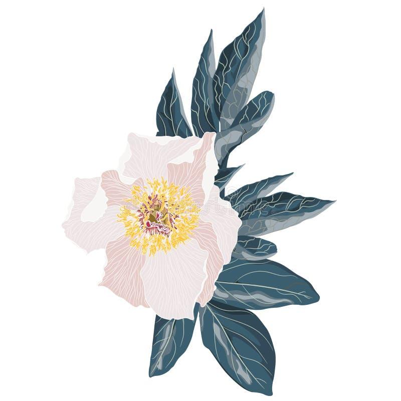 Ανοικτό ροζ peony κήπων με τα μπλε φύλλα Watercolor, χέρι που χρωματίζεται, που απομονώνεται στο άσπρο υπόβαθρο διανυσματική απεικόνιση