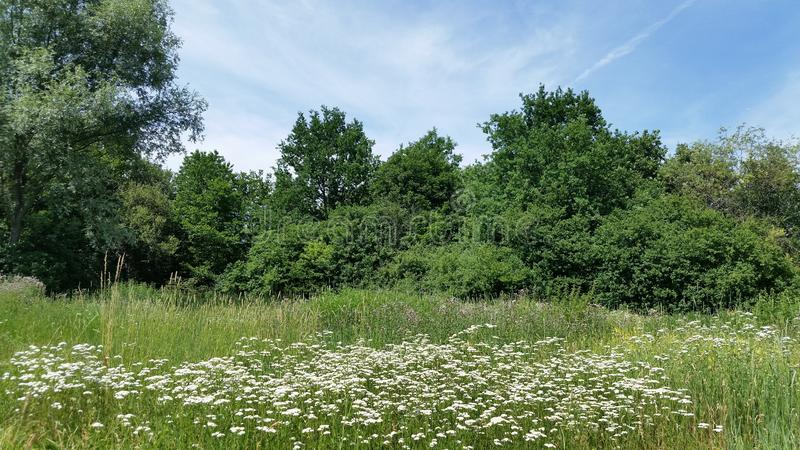 Ανοιχτός χώρος Ζωηρόχρωμα βλαστάνοντας άγρια λουλούδια στοκ εικόνες