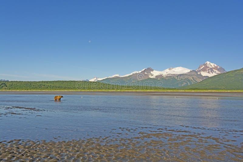 Αντέξτε στην από την Αλάσκα αγριότητα στοκ εικόνες