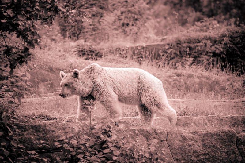 αντέξτε τη φωτογραφία της Γερμανίας κήπων του Βερολίνου ζωολογική στοκ φωτογραφίες με δικαίωμα ελεύθερης χρήσης
