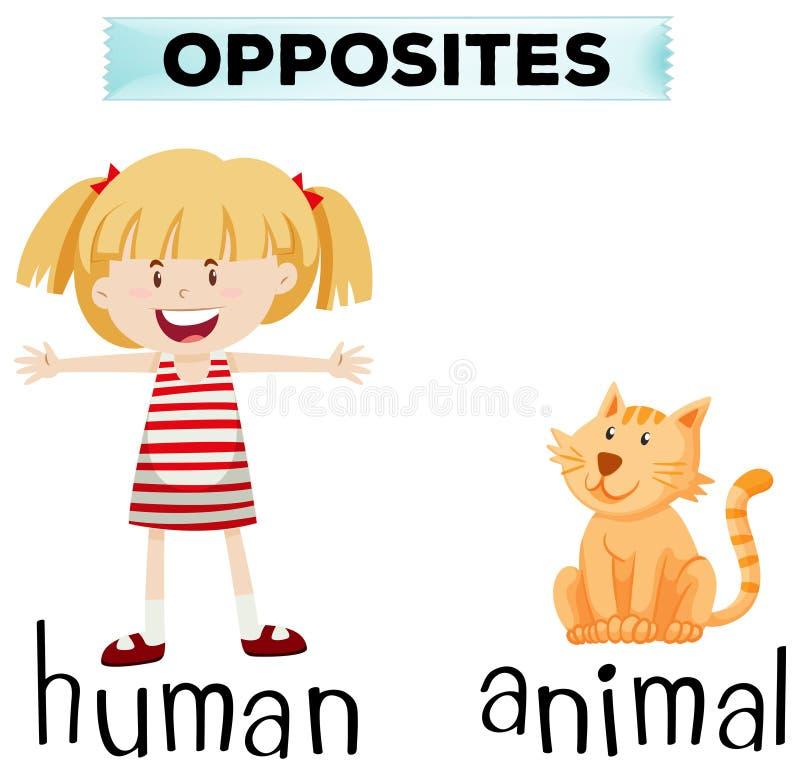 Αντίθετο wordcard για ανθρώπινος και ζωικός ελεύθερη απεικόνιση δικαιώματος