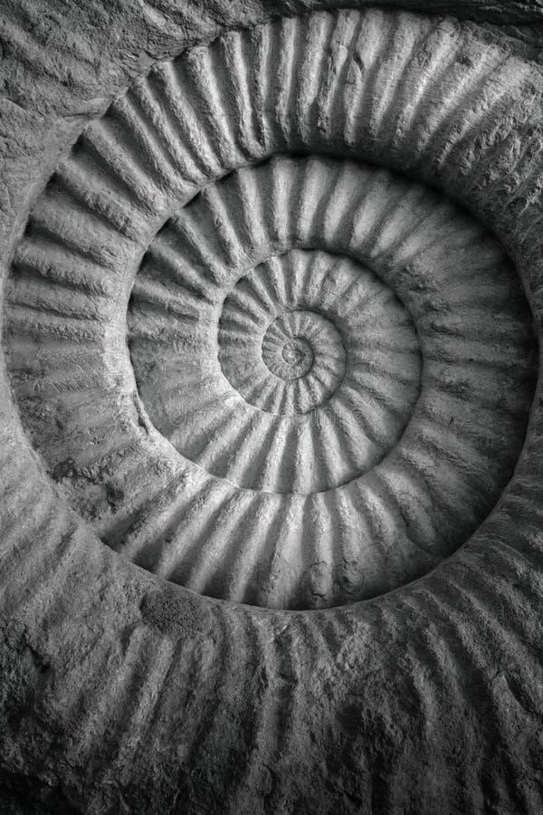 Αντίκα ammonite του προϊστορικού απολιθωμένου υποβάθρου στοκ φωτογραφίες με δικαίωμα ελεύθερης χρήσης