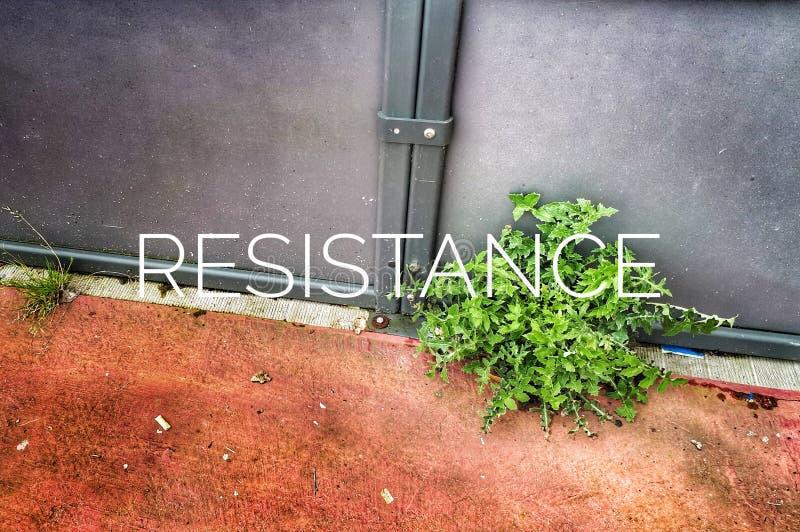 αντίσταση στοκ φωτογραφίες με δικαίωμα ελεύθερης χρήσης